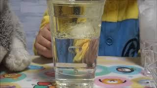この動画ではたぬりの実験室で行った夏休み理科の自由研究候補の1つ水...
