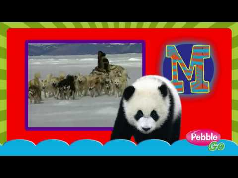 Pebblego Interactive Database Youtube