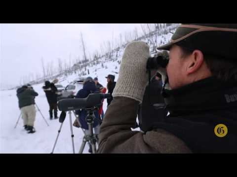 Winter Safari in Yellowstone -  Tools to help you spot the wildlife