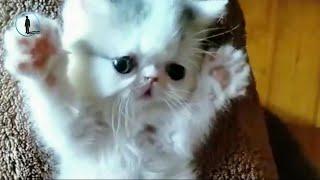 Kasım Ayının En Sevimli Yavru Kedi Videoları Komik Kediler 2018 bluesky