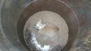 Котэ ловит мыш  Что будет если бросить кота к мышам