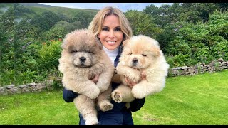 CHOW CHOW PUPPIES  Dangerous to kids?