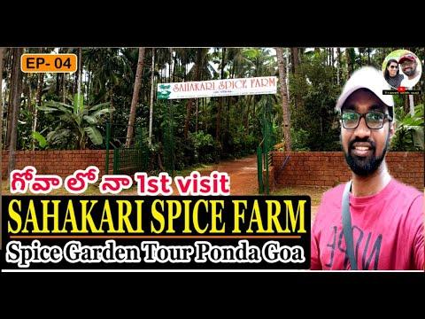 Goa Trip Plan In Telugu   Sahakari Spice Farm Tour   Spice Garden Ponda  Day1 Goa Travelwithsuji