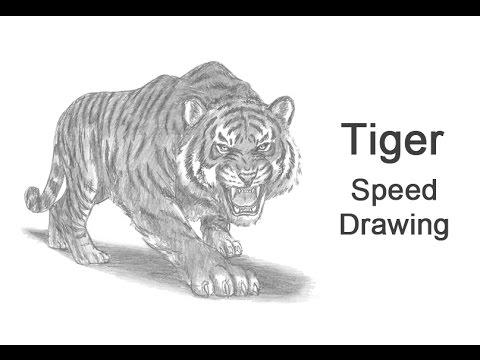 77eba0ce7c8e4 How to Draw a Tiger Roaring