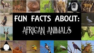 Fun Facts About : African Animals