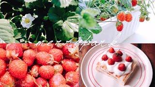 vlog21.딸기 키우기와 초간단 딸기디저트 만들기ㅣH…