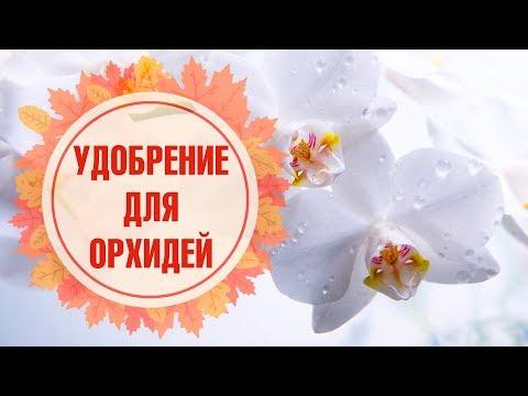 Удобрения для орхидей 🌺 Здравень аква 🌺 Обзор hitsadTV