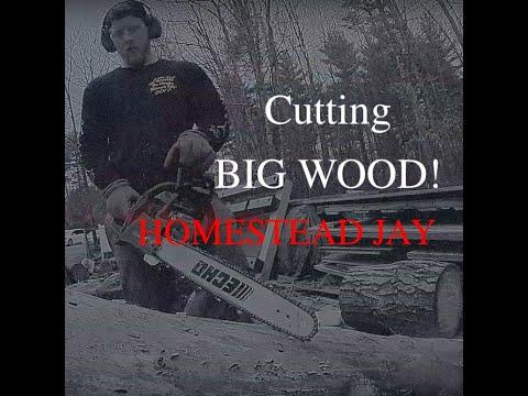 Echo CS-490 Cutting BIG WOOD with Oregon Powercut Chain! EP 35