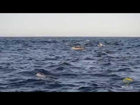 Jersey Tuna: Episode 1 Midshore Yellowfin