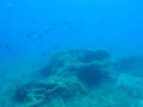 samos, diving, scuba, greece