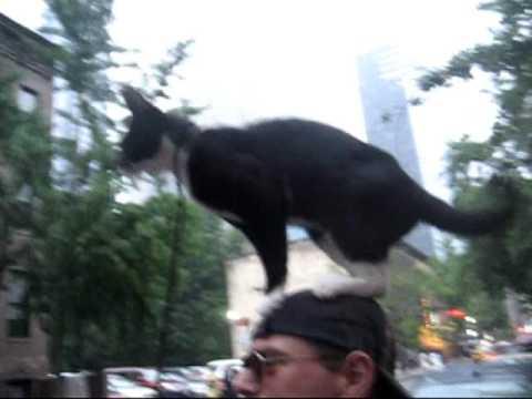 Cat On My Head