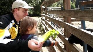 Little Farm at Tilden Park