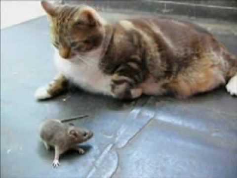 Con chu t d ng c m   chi n đ u v i mèo   ss   kphim info Forum Xem Phim Tr c Tuy n Hàng Đ u Vi t Nam
