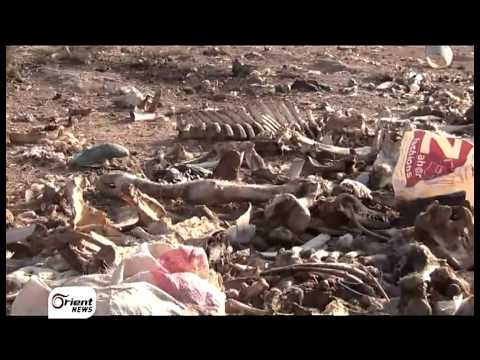 أورينت نيوز | الثروة الحيوانية مهددة بالموت جراء نقص الأعلاف في الغوطة الشرقية