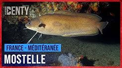 La Mostelle en Chasse sous-marine
