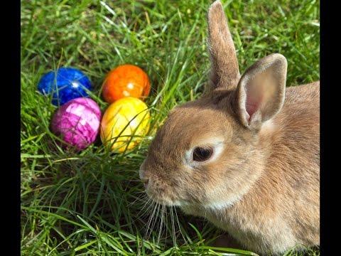 Ich WГјnsche Euch Allen Frohe Ostern