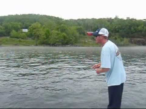 Fly fishing at bull shoals dam on the white river for White river arkansas fishing report