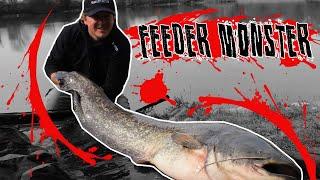 Pêche du silure au feeder