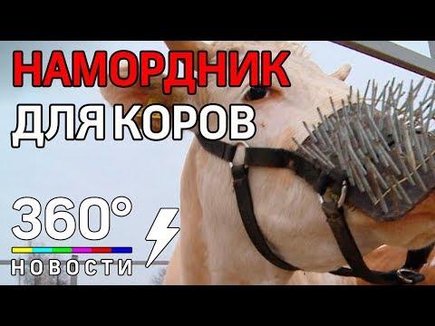 50 оттенков молока: намордник для коров от Олега Сироты