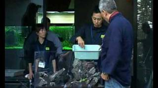 Takashi Amano -how Is Made -nature Aquarium