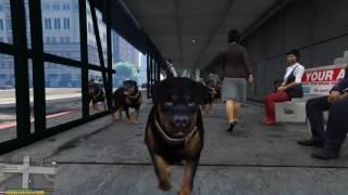 GTA 5 - Стая собак!