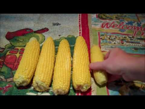 How to Freeze and Store Sweetcorn