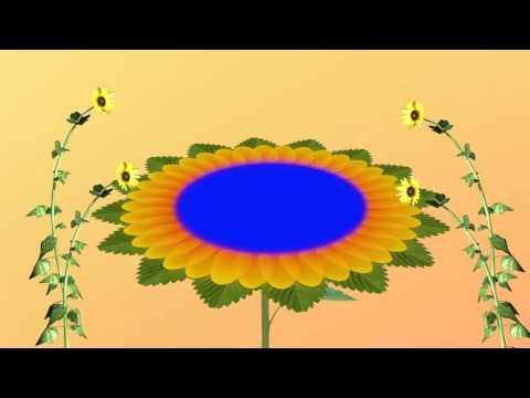 Wedding Flower Background HD 1080p thumbnail