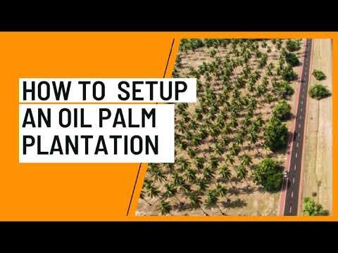 How to Setup an Oil Palm Plantation in 2021 @SabiAgrik TV