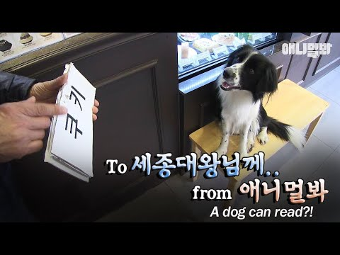 이 영상을 세종대왕님께 바칩니다ㅣAmazing genius dog that learns and read Korean letters