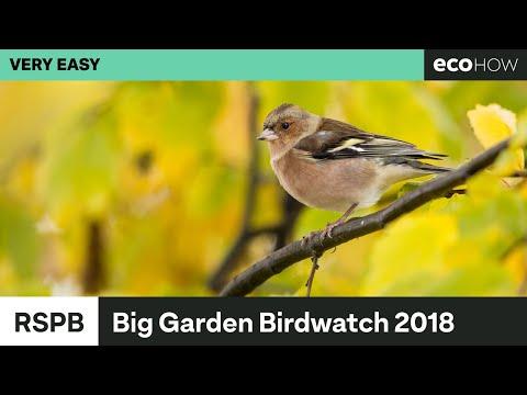 RSPB Big Garden Birdwatch 2018 Results