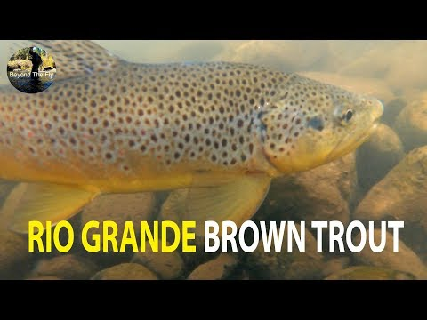 BEYOND THE FLY | Fly Fishing The Rio Grande River