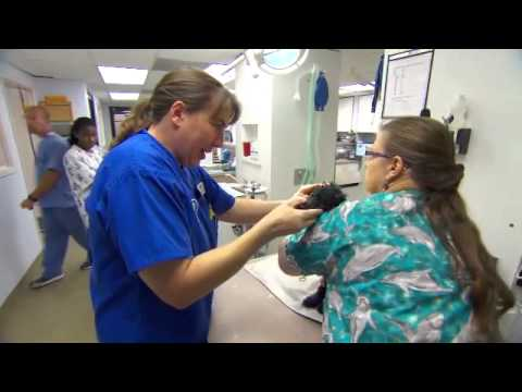 Emergency Animal Medical Technicians (EAMT) ™