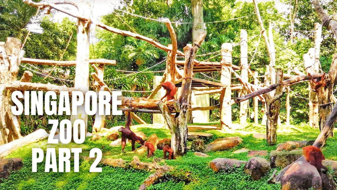 Singapore Zoo Walking Tour (Part 2)