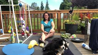 Puppy Preparation: Equipment you need for a new Bernese Mountain Dog puppy!