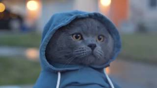 Приколы с котами 🐈 озвучка животных – Грустный день кота Мурзика – Domi Show