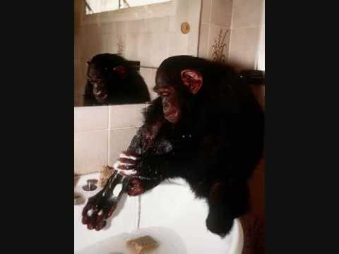 The Death of Travis the Chimpanzee