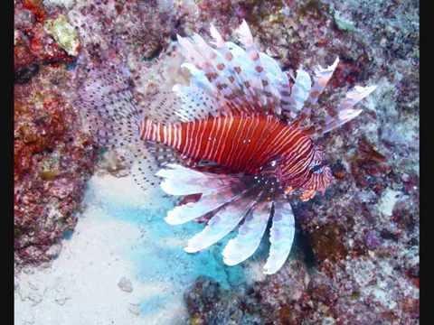 Scuba Diving Tonga