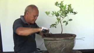 Bonsai Tutorials for Beginners: How to b...