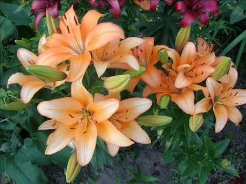Цветы в саду фото.