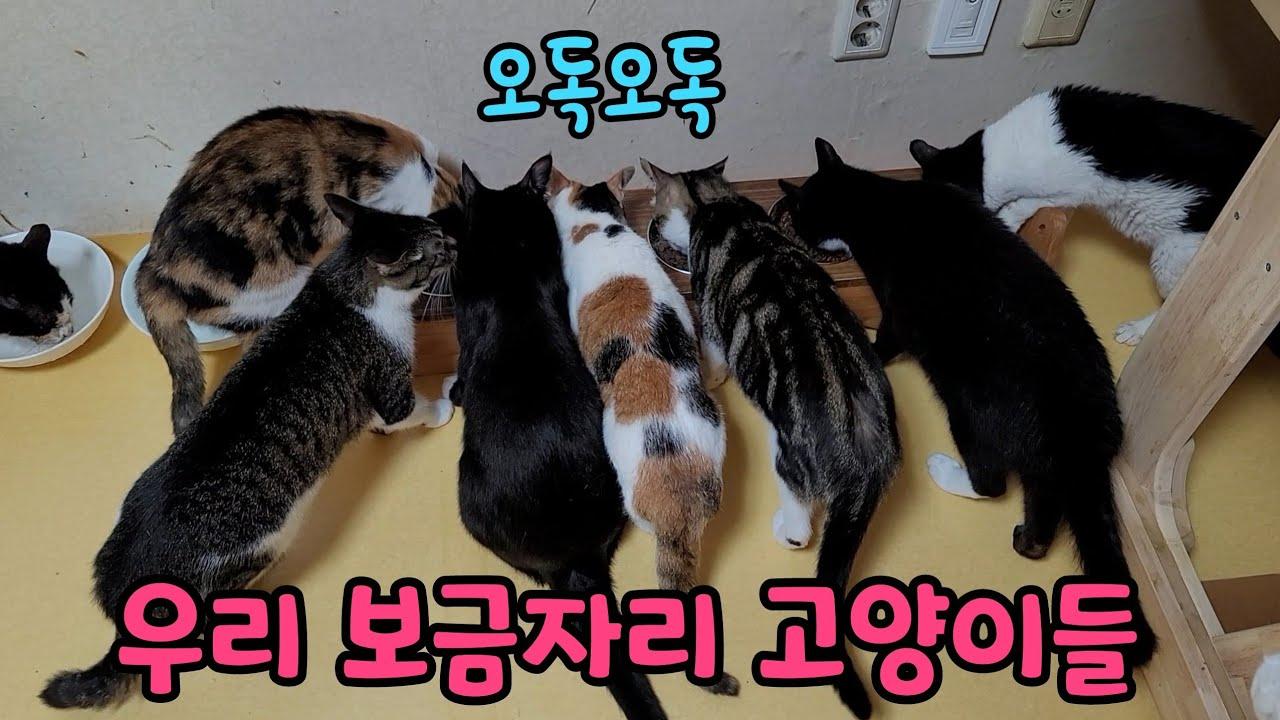 우리 보금자리 고양이들(feat.캣츄얼, 노드그린)