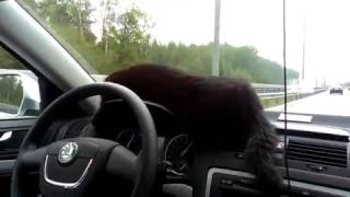 Кот едет на дачу