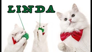CAT tricks || trained CAT brings her favorite toy to play || LINDA - THE SAVITSKY CATS