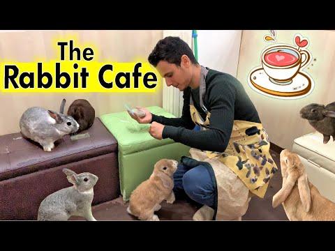 The Rabbit Cafe Tokyo Japan | Bunny Cafe Japan | Usa Cafe Mimi