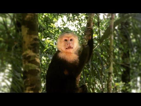 Costa Rica Travel Video 2017 - Arenal, Monteverde Cloud Forest, Montezuma & Manuel Antonio