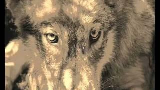 wolves - slipped away
