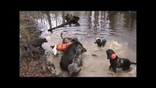 !!!!!GRAPHIC HOG DOG HUNT #6 HAWGZILLA!!!!