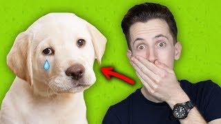 אכלתי כלב ?! (שאלות ותשובות)