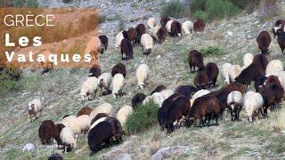 Grèce - L'odyssée des Valaques - #fautpasrever
