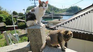 JG 4K 愛媛 青島(十数人の住民と百匹のネコ) Ehime,Aoshima(10+ residents and 100+ cats)