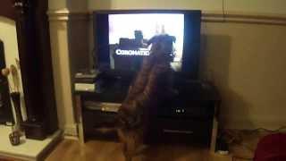 Bobby The Border Terrier Loves Corrie